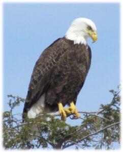 Eagle Watersmeet